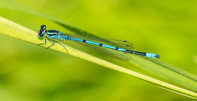 Dragonfly, šidélko, Punch, Insect, Macro, Blue