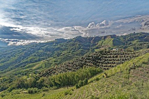 Colombia, Anserma, Caldas, Nature, Landscape, Trees