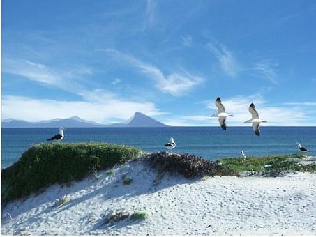Sea, Gulls, Seagull, Dominican Seagulls, Seagull Colony