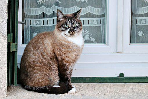 Cat, Window, Animals, Eyes, Cute, Fur, Portrait, Look