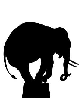 Elephant, Circus Elephant, Performing, Animal