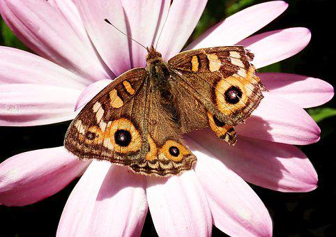 Butterfly, Insect, Damaged Wing, Nectar