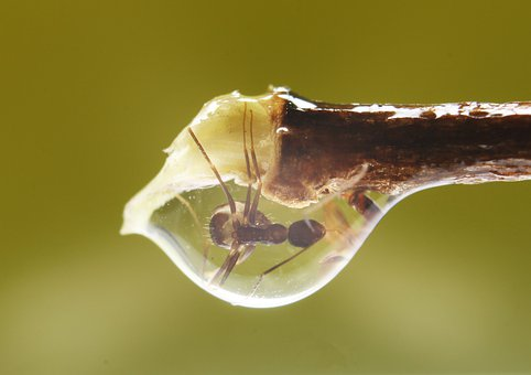 Ant, Stuck, Macros, Macro, Animals, Fauna, Spiral