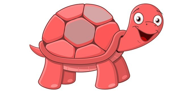 Turtle, Animal, Nature, Red Turtle, Smile, Bird, Winter