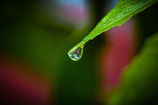 Water Drops, Drops, Leaves, Nature