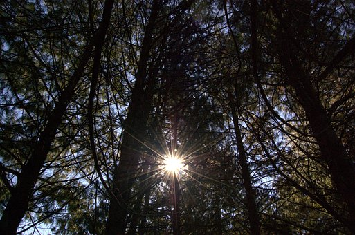 Sun Ray, Sun, Ray, Forest, Light, Nature