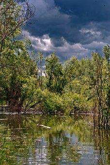 Nature, Landscape, Water, Clouds, The Bushes, Purple