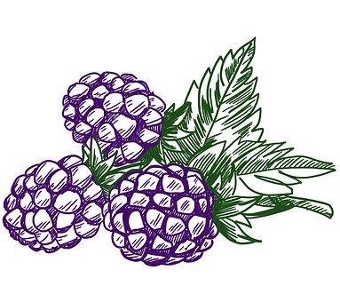 Blackberry, Fruit, Berry, Food, Fresh, Sweet, Natural