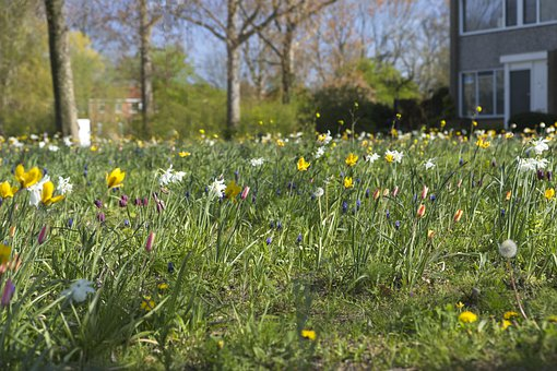 Spring, Flowers, Narcissus, Bostulpen, Spring Flowers
