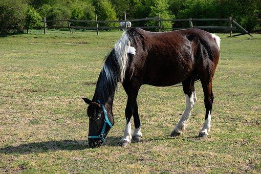 The Horse, Stud, Mare, The Mane, Pasture Land, Animals