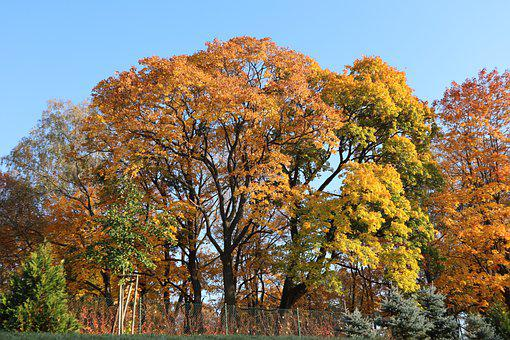 Autumn, Tree, Landscape, Forest, Forests