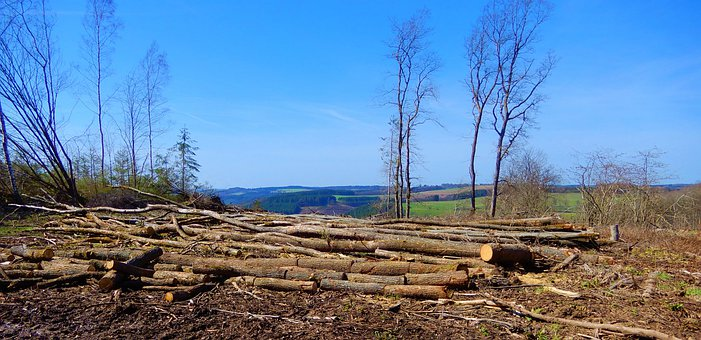 Nature, Forestry, Deforestation, Wood, Trees, Trunks