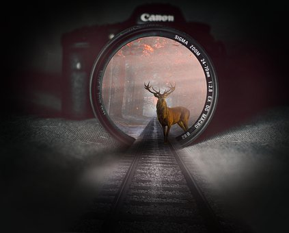 Fantasy, Another Dimension, Deer, Magic, Camera