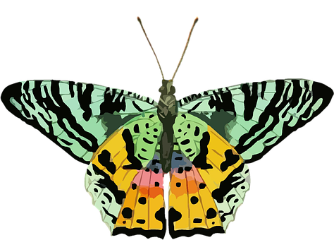Butterfly, Clip Art, Colorful, Green, Yellow, Nature