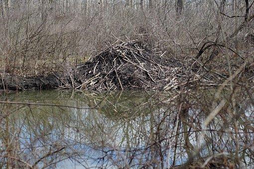 Beaver, Detroit, Damn, Water, Forest, River, Nature