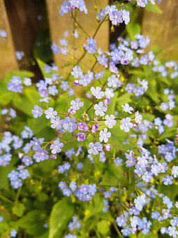 Tiny, Flowers, Nature