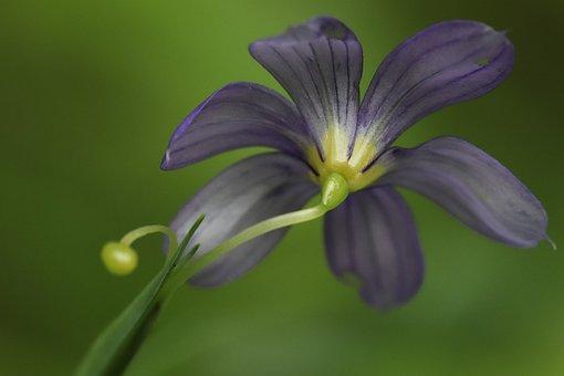 Tiny Flower, Small World, Blossom, Lavender, Green