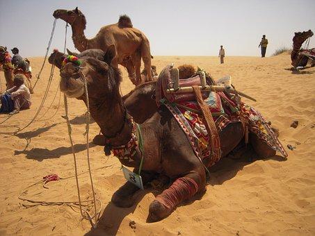 Desert, Sumer, Camel, Sand, Landscape, Travel, Nature