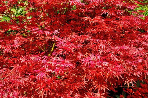 Garden, Bush, Bloom, Plant, Spring, Flowering Shrub