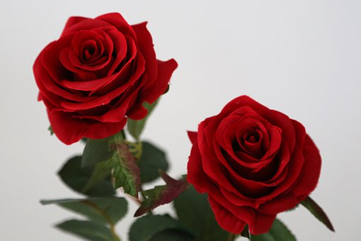 Two Artificial Red Roses, Flower, Decoration