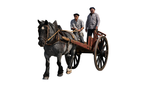 Wagon, Human, Transport, Horses