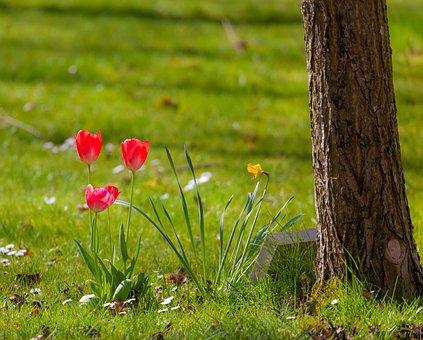 Flowers, Crocus, Memorial Stone