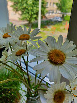 Bouquet, Window, Chamomile, Vase, Flowers, Summer