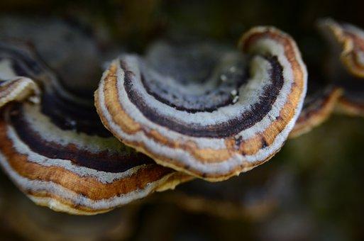 Stereum Subtomentosum, A Velvety Layer Of Fungal