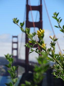 San Francisco Bridge, San Francisco, Bridge