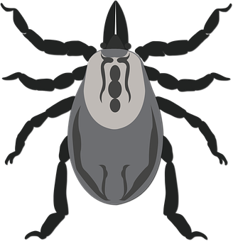 Tick, Lyme, Disease, Parasite, Bite, Infection