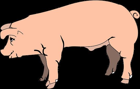 Pink, Pig, View, Barn, Farm, Side