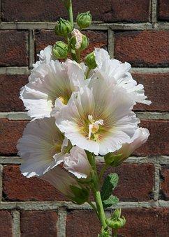 Blossom, Flower, Summer, Love, Flora, Blooming, Botany