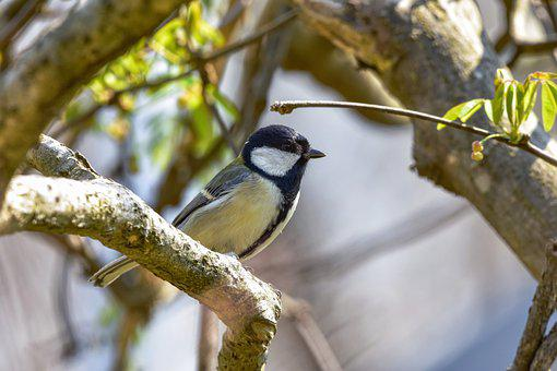 Animal, Forest, Wood, Green, Bird, Wild Birds, Tits