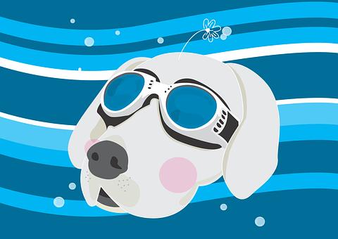 Huskies, Dog, Wind-proof Glasses, Pet, Illustration