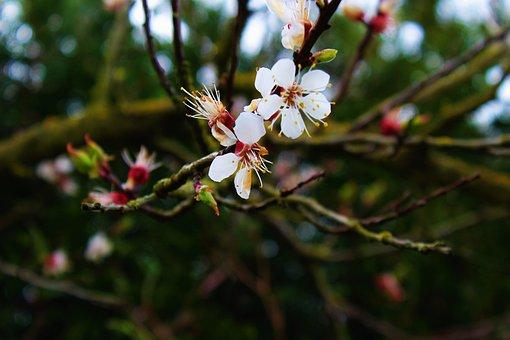 Easter, Flower, Spring, Nature, Garden