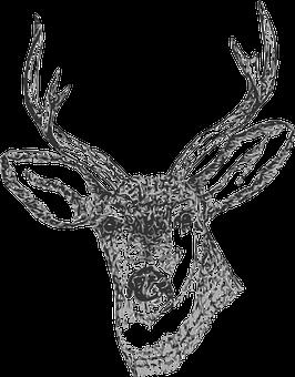 Buck, Head, Stag, Deer, Drawing, Horns