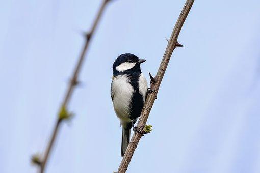 Animal, Sky, Wood, Sting, Bird, Wild Birds, Tits