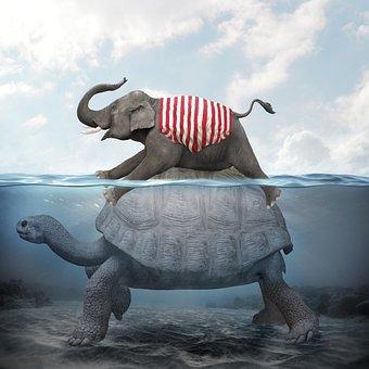 Manipulation Jumbo, Tortoise, Sea, Underwater