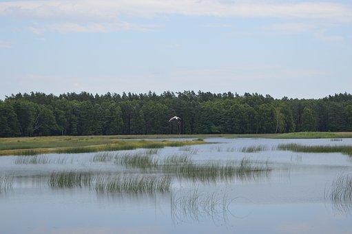 Zwierzyniec, Echo, Mite, Pond, Lake, Water, Summer