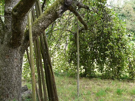 Support, Fruit Tree, Orchard, Agriculture