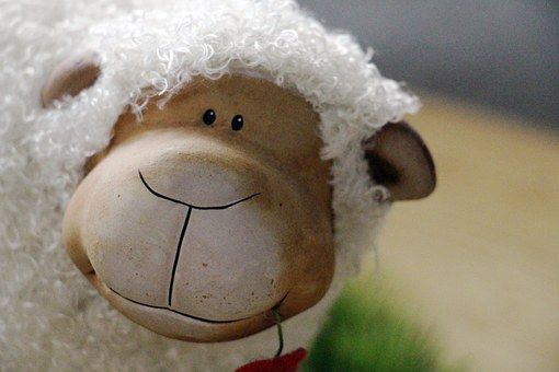 Sheep, Wool, Animal, Funny, Fur, Friendly, Soft