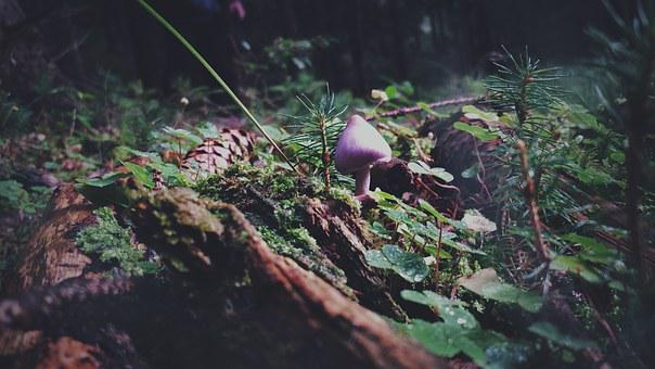 Mushroom, Forest, Nature, Autumn, Toxic, Gift, Moist
