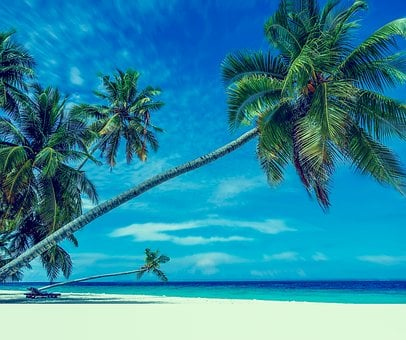 Palm Trees, Beach, Sand, Paradise, Holiday, Bathing