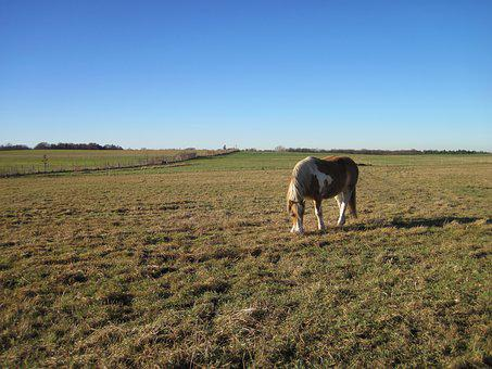 Horse, Pasture, Grass, Eat, Graze, Coupling, Pinto