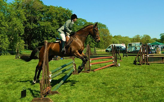 Horse, Rider, Show, Jumping, Equestrian, Sport