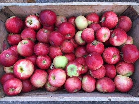 Apples, Farmers Market, Basket, Fresh, Fruit, Healthy