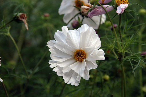 Flower, White, Open, Nature, Plant, Floral, Spring