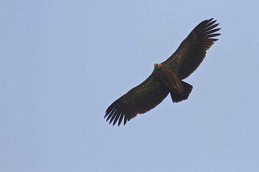 Bird, Flying, Blue Sky, Fly, Sky, Nature, Wildlife