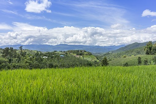 Land, Farm, Forest, Green, Agriculture, Nature, Field
