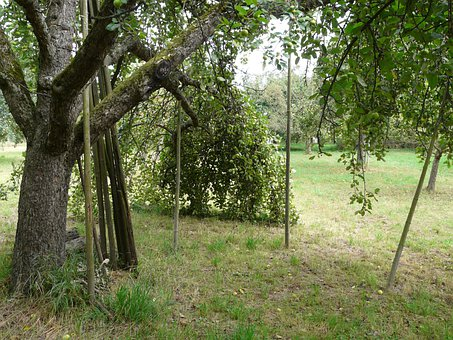 Orchard, Fruit Tree, Agriculture, Support